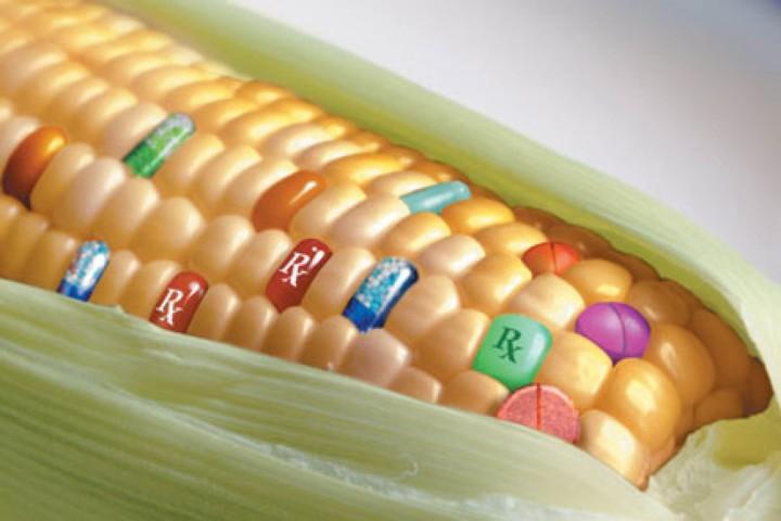 Transgenicos y soberania alimentaria