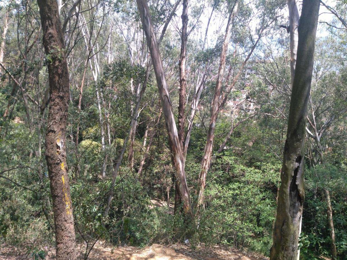 En Bello, Piamonte se encuentra en peligro