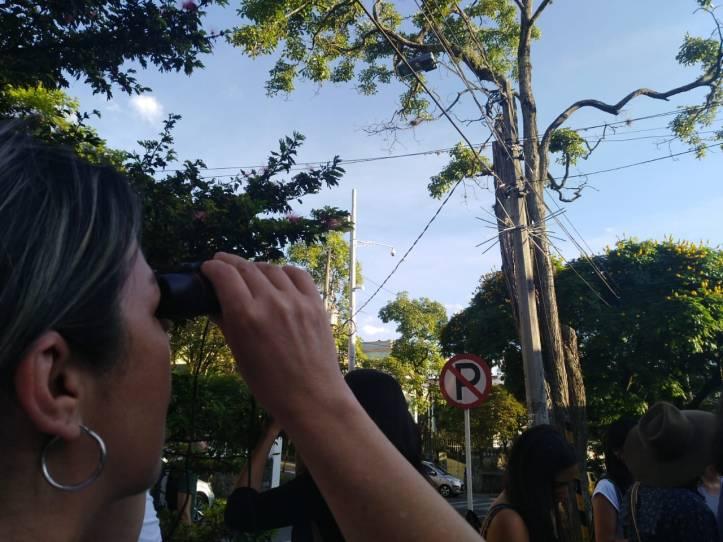 observando el guayacan.jpg
